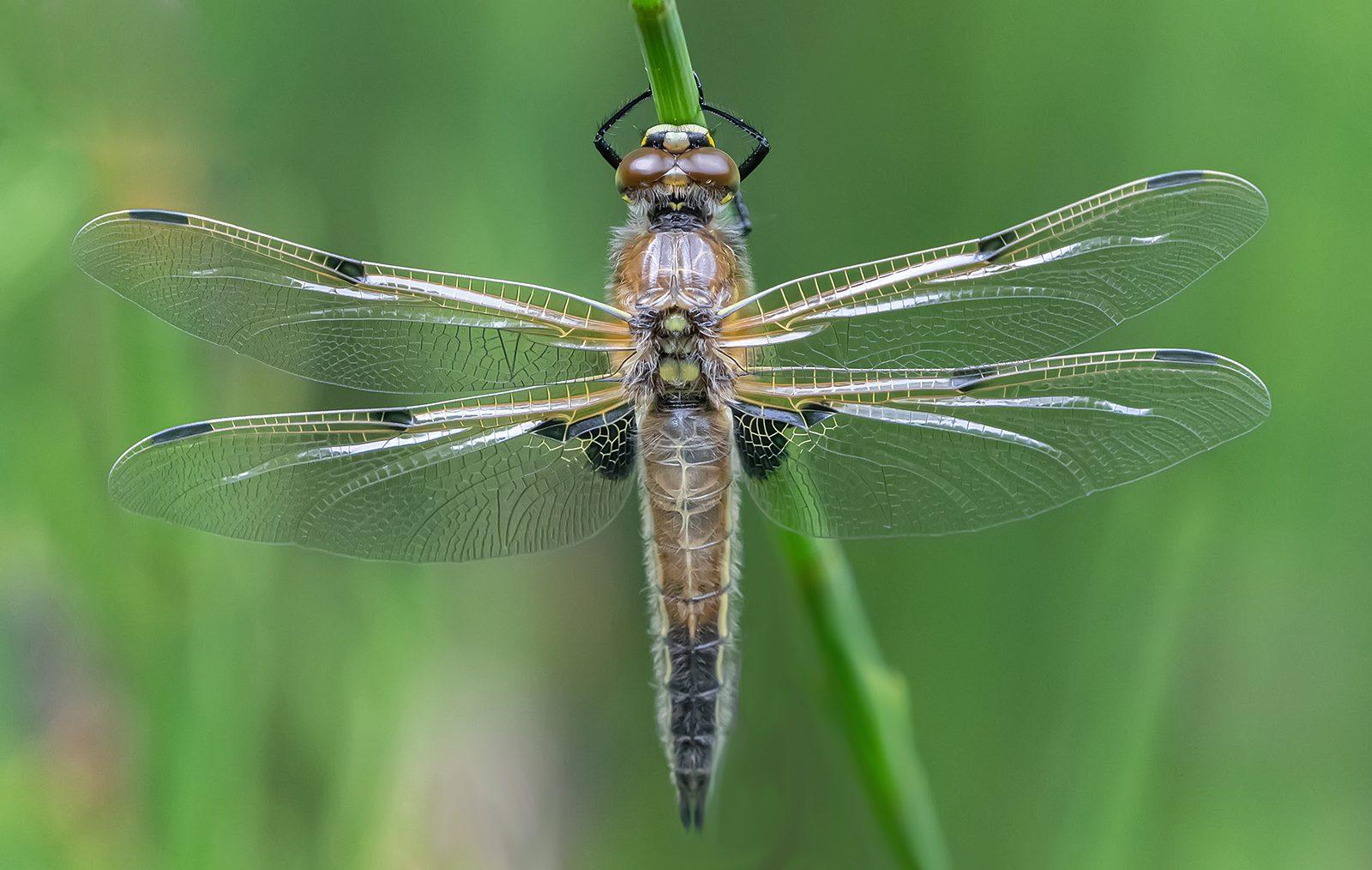 Wings Of Gossamer 1.jpg
