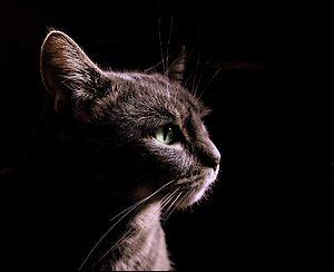 cat-3767494_1920.jpg