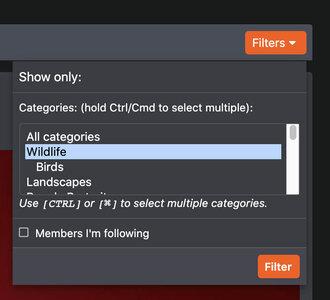 alphagram-filter.jpg
