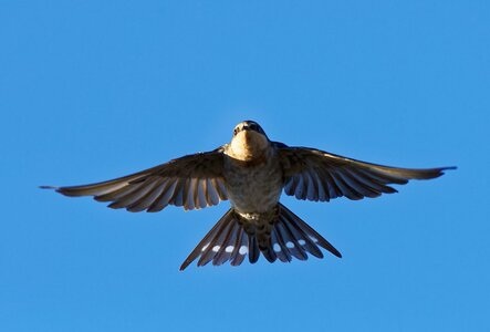 Welcome Swallows WTP (22).jpg