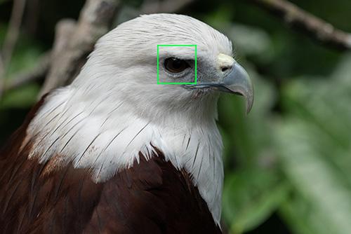 sony animal eye af