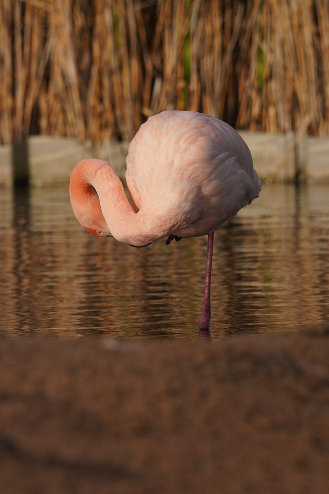 Flamingo Sigma 60-600 Sample Image Sony A7RIII