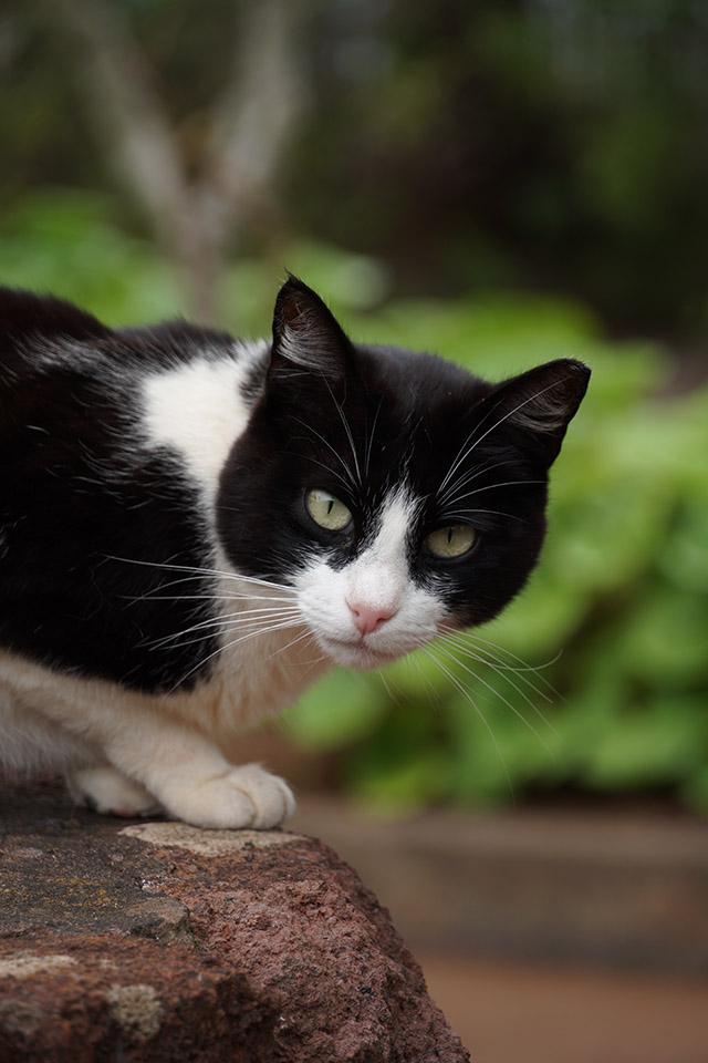 sony sel18135 wild cat la gomera