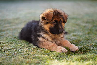 sony a7iii sample images gsd puppy long hair