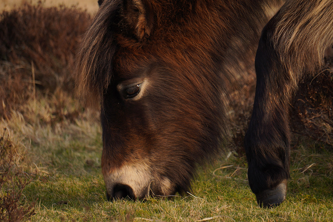 sony a6400 sample image exmoor pony