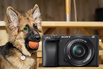 sony a6400 animal eye af setup