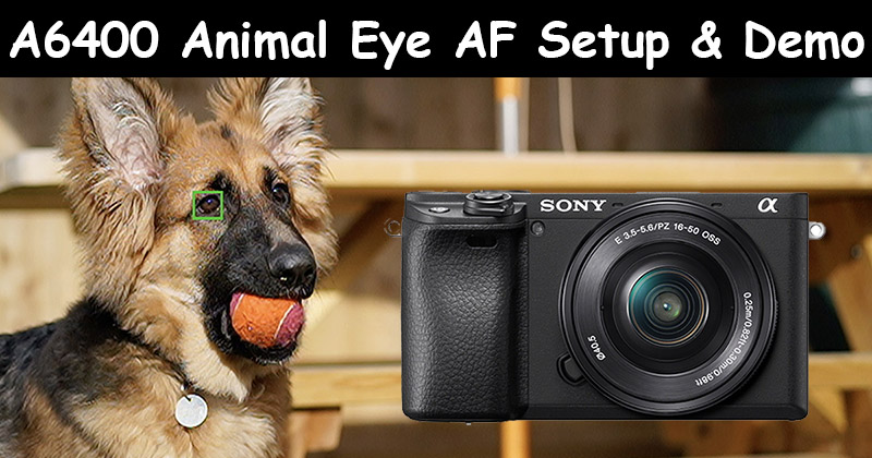 sony a6400 animal eye af setup