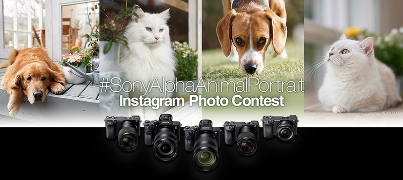 sony alpha animal portrait contest