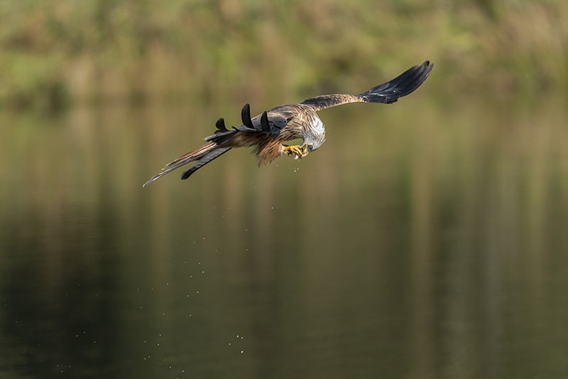 Sony a9 red kite