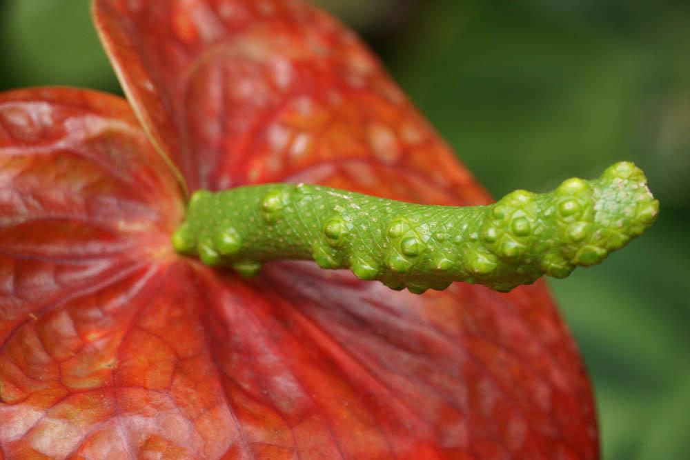 Sony SEL18135 Sample - Jardin Botanico